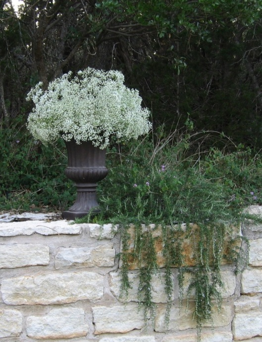 Baby's Breath for Ceremony Setting